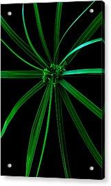 Spider Plant Acrylic Print by Marwan Khoury