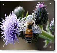 Acrylic Print featuring the photograph Spider Surprise by Jessica Tookey