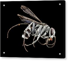 Spider Wasp Acrylic Print by Us Geological Survey
