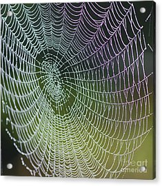 Spider Web Acrylic Print by Heiko Koehrer-Wagner