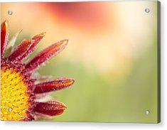 Spider's Stitch On Blanket Flower Acrylic Print