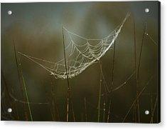 Spider's Trap Acrylic Print