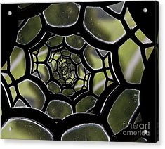 Acrylic Print featuring the photograph Spider's Web. by Clare Bambers