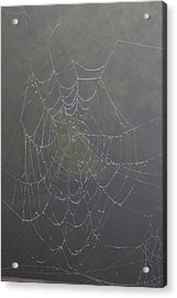 Spiderweb Acrylic Print by Allan Morrison