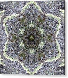 Spiderweb Pattern Acrylic Print