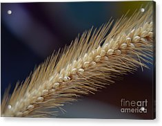Acrylic Print featuring the photograph Spike by Michelle Meenawong