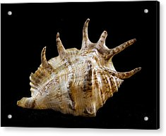 Spikes Back Side Acrylic Print by Jean Noren