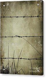 Spikey Wire Acrylic Print by Svetlana Sewell