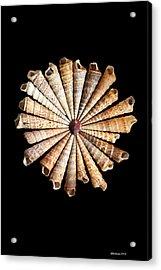 Spinning Wheel Acrylic Print