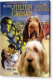 Spinone Italiano - Italian Spinone Art Canvas Print - Julius Caesar Movie Poster Acrylic Print