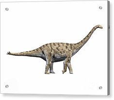 Spinophorosaurus Nigerensis, Middle Acrylic Print by Nobumichi Tamura