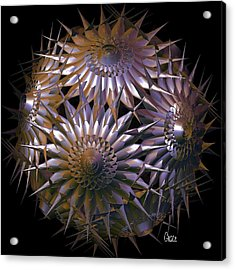 Spiny Beauty Acrylic Print