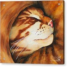 Spiral Cat Acrylic Print