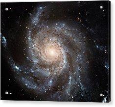 Spiral Galaxy M101 Acrylic Print by Nasa