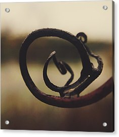 Acrylic Print featuring the photograph Spiral Inside by Nikki McInnes
