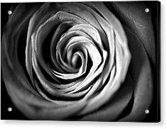 Spiraling Rose Acrylic Print