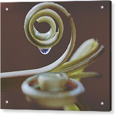 Spirals Acrylic Print