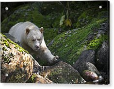 Spirit Bear Up Close Acrylic Print