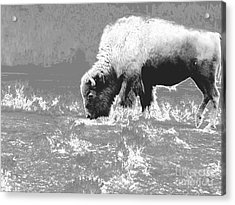 Spirit Bison Acrylic Print by Ann Johndro-Collins