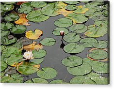 Spirit Lake Lillies Acrylic Print