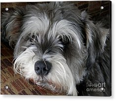 Spirit Missing Lisa -sparke Acrylic Print by Angelia Hodges Clay