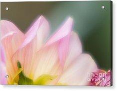 Spirit Of Flower Acrylic Print by Tad Kanazaki