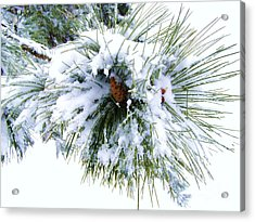 Acrylic Print featuring the photograph Spirit Of Pine by Margie Amberge