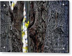 Spirit Of The Forest Acrylic Print by Andrea Kollo