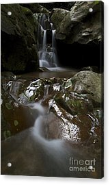 Acrylic Print featuring the photograph Spirit Of The Forrest  by Gary Bridger