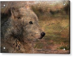 Spirit Of The Wolf Acrylic Print by Deena Stoddard