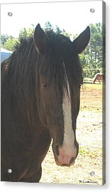 Spirit Acrylic Print by Wendy Coulson