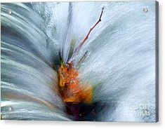 Acrylic Print featuring the photograph Splash O Color by Thomas Bomstad