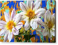 Splash Of Color Acrylic Print by Garry Gay