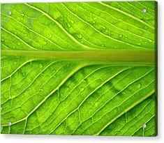 Splash Of Green Acrylic Print by Tom Druin