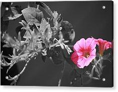 Splash Of Pink Acrylic Print by Kimberly Elliott