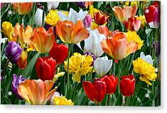 Acrylic Print featuring the photograph Splash Of Spring by William Jobes