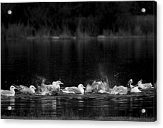 Acrylic Print featuring the photograph Splashing Seagulls by Yulia Kazansky
