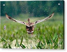 Splashy Take-off Acrylic Print by Shell Ette
