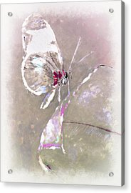Splatter Acrylic Print by Jill Balsam