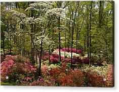 Splendor - Azalea Garden Acrylic Print