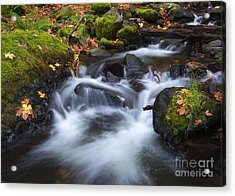 Splitting The Forest Acrylic Print by Mike Dawson