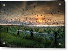 Spooked Geese Acrylic Print by Allen Biedrzycki