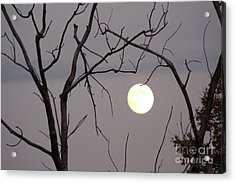 Spooky Moon Acrylic Print by Deborah Smolinske