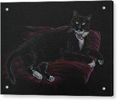 Spooky The Cat Acrylic Print