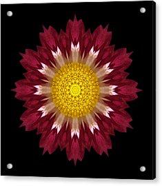 Spoon Chrysanthemum I Flower Mandala Acrylic Print by David J Bookbinder