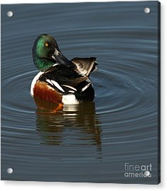 Acrylic Print featuring the photograph Spooney by Bob and Jan Shriner