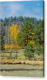 Spot Of Color Acrylic Print by Baywest Imaging