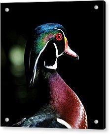 Spotlight Wood Duck Acrylic Print by Steve McKinzie