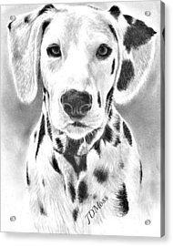 Spots Everywhere Acrylic Print by Janet Moss