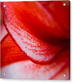 Spots Of A Lily Acrylic Print by Kim Lagerhem